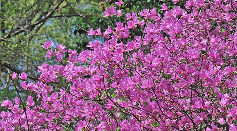 六甲山の植物