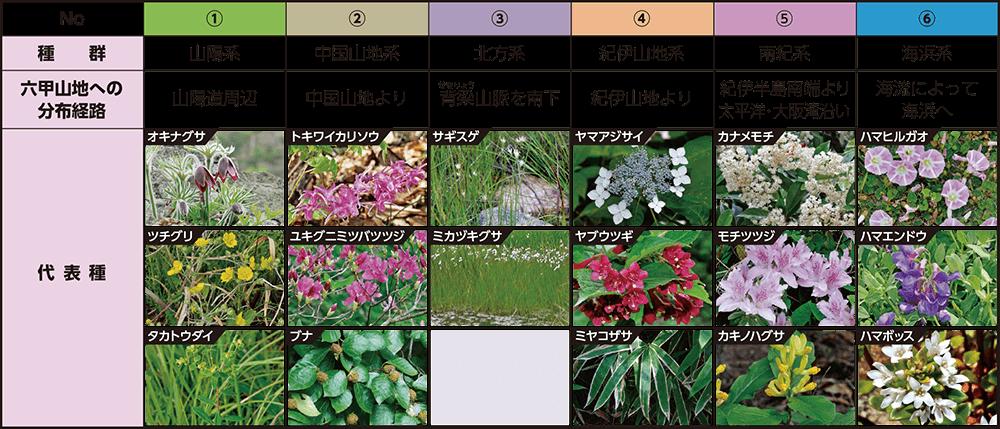 六甲山地の植物相を構成する6系統